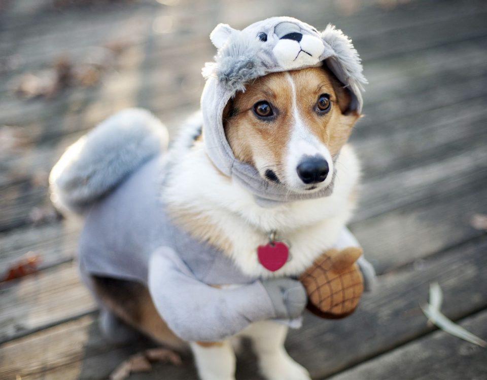 Κομμωτήριο Σκύλων Βουλιαγμένη