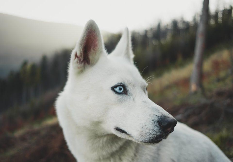 Κομμωτήριο Σκύλων Καισαριανή
