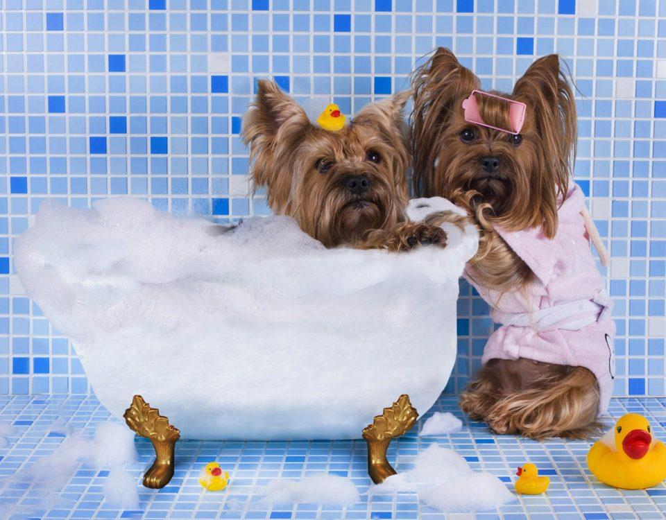 Κομμωτήριο Σκύλων Καλλιθέα
