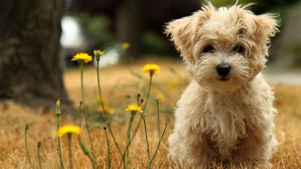 Κομμωτήριο Σκύλων Μοσχάτο