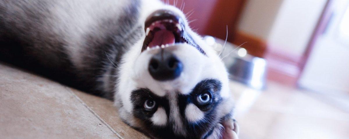 Κομμωτήριο Σκύλων Νέα Σμύρνη