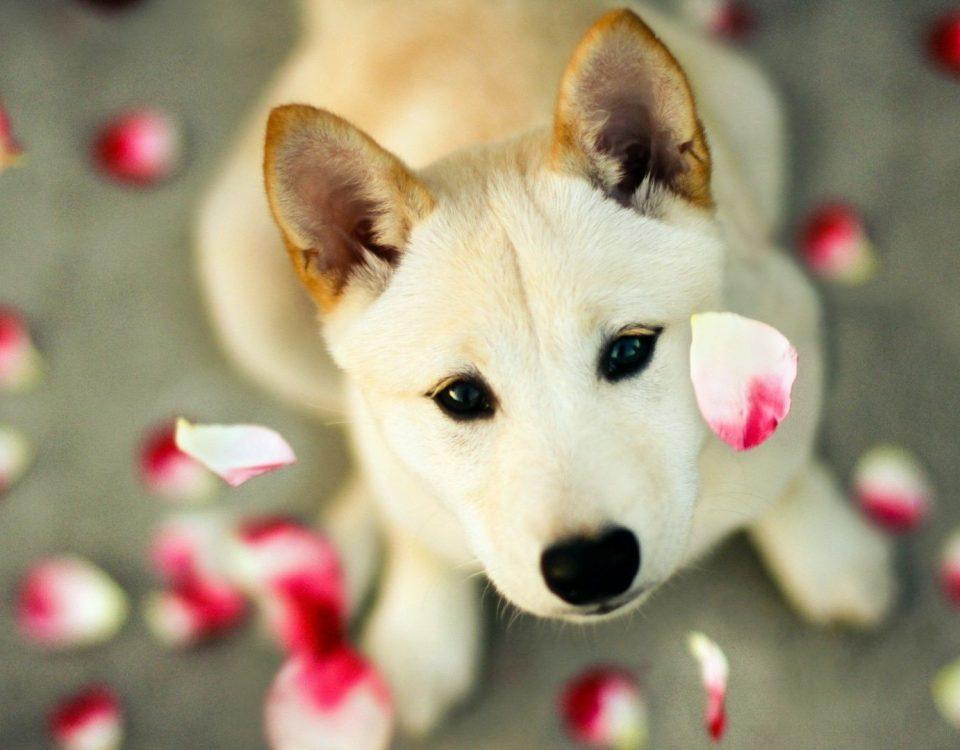 Κομμωτήριο Σκύλων Νέο Κόσμο