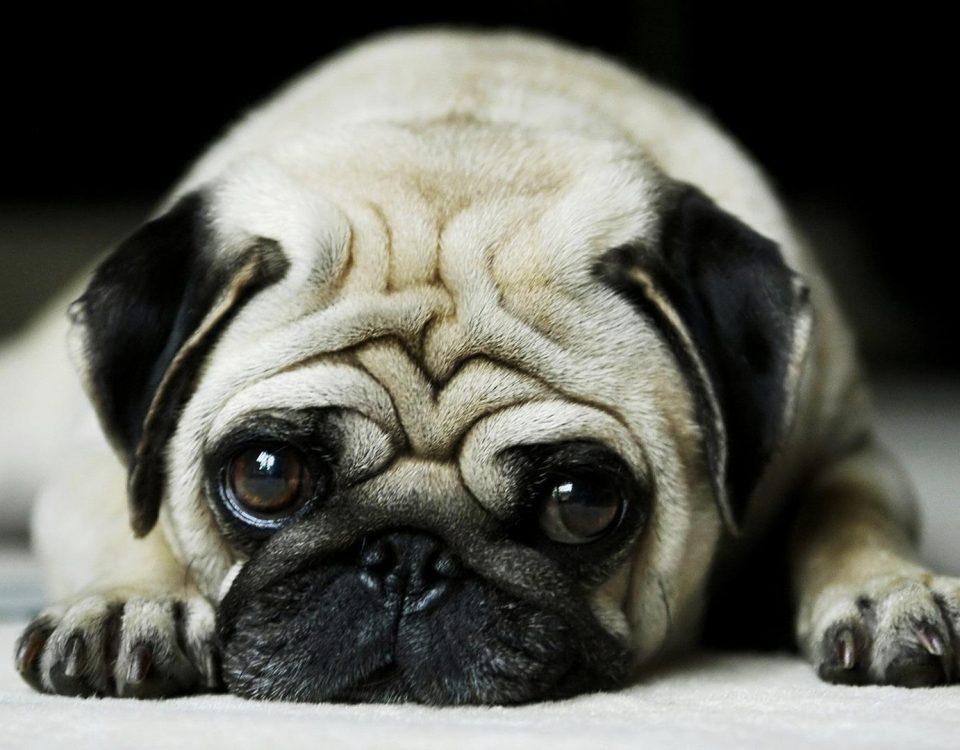 Κομμωτήριο Σκύλων Παλαιό Φάληρο