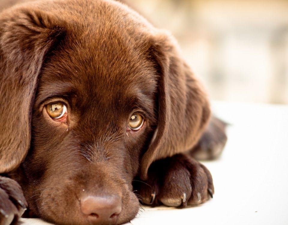 Κομμωτήριο Σκύλων Υμηττός