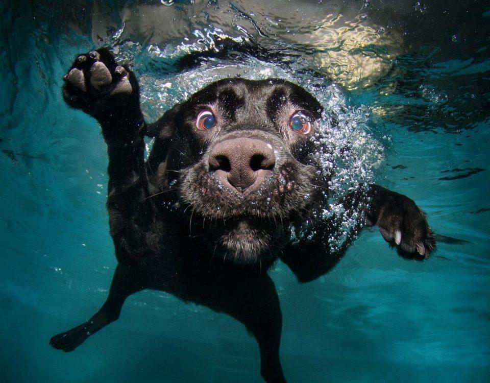 Κομμωτήριο Σκύλων Άλιμος