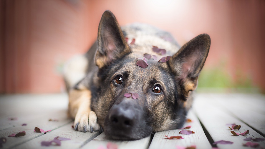 Κομμωτήριο Σκύλων Γλυφάδα
