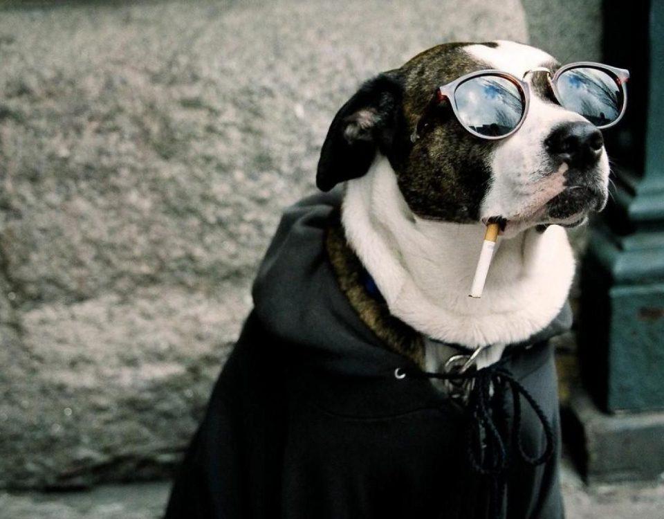 Κομμωτήριο Σκύλων Βάρη